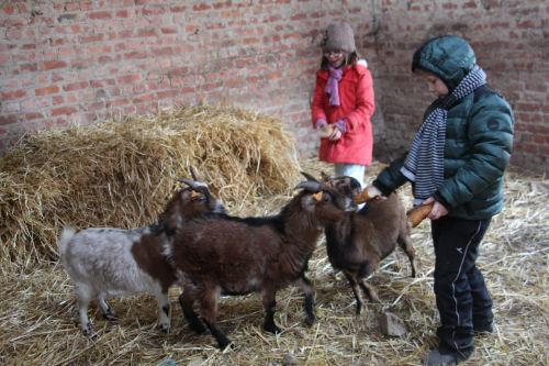 chèvres et enfants